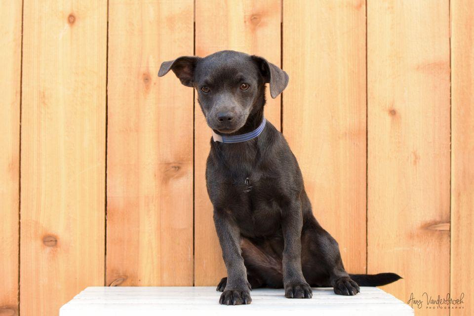 Lifeline Puppy Rescue - Brighton, Colorado