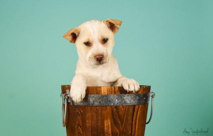 Lifeline Puppy Rescue Brighton Colorado