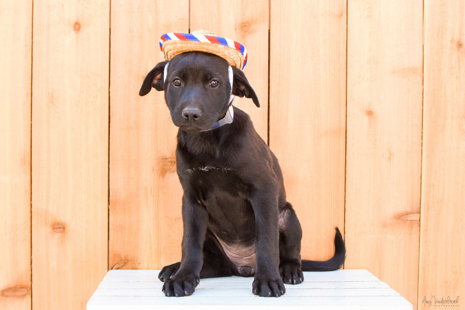 Rescue Puppies Dogs For Adoption Near Me In Colorado USA