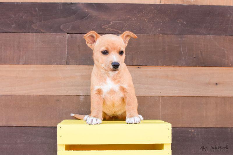 893-18   Lifeline Puppy Rescue - Brighton, Colorado