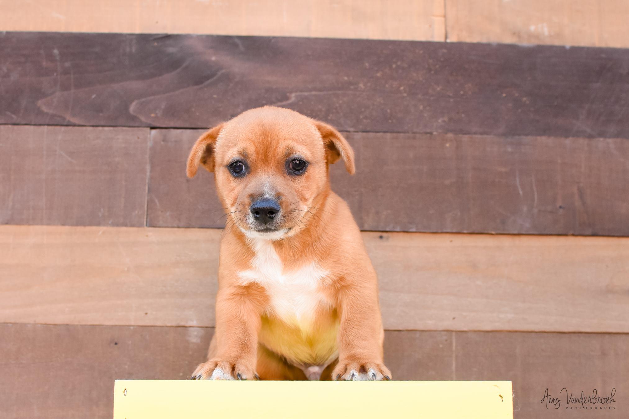 894 18 Lifeline Puppy Rescue Brighton Colorado