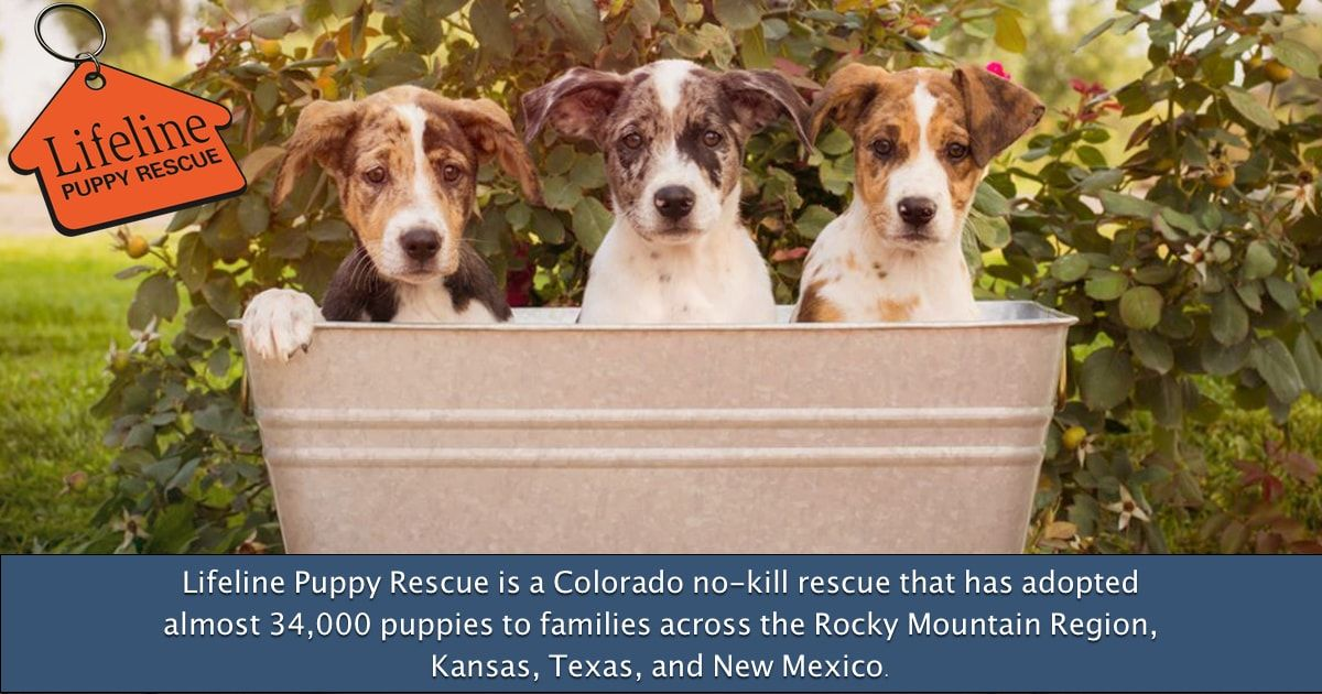 Lifeline Puppy Rescue Brighton Colorado